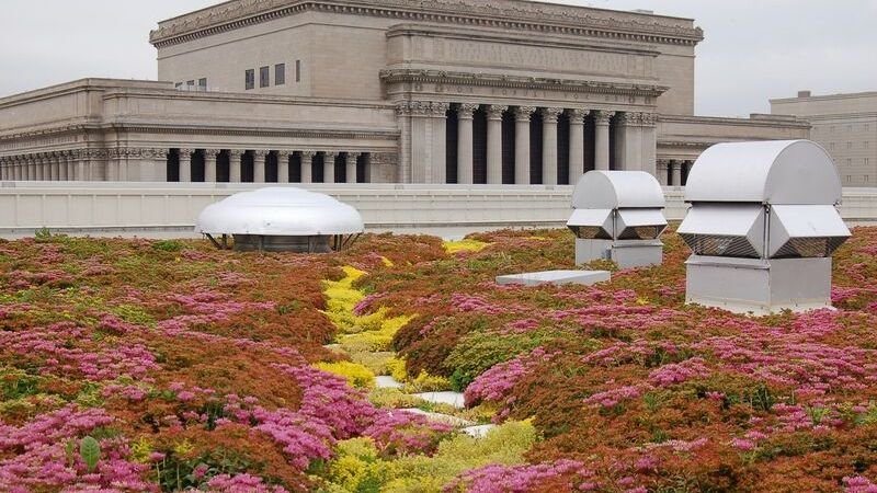 green roof on business