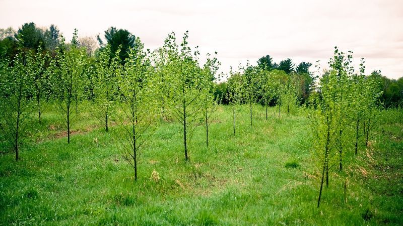 Milwaukee Stormwater Tree Project Example tree