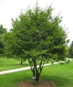 tree_compact_w.jpg