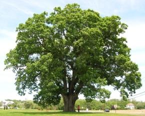 tree_lg_w.jpg