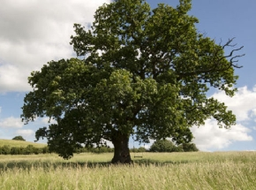 tree_wide_w.jpg