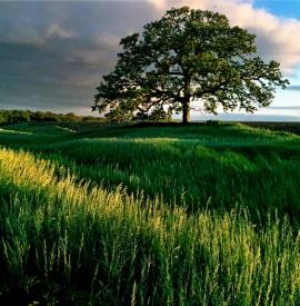 grassland_w.jpg