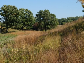 prairie_grasses_w.jpg