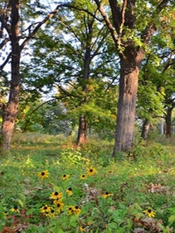 prairie_flowers_w.jpg